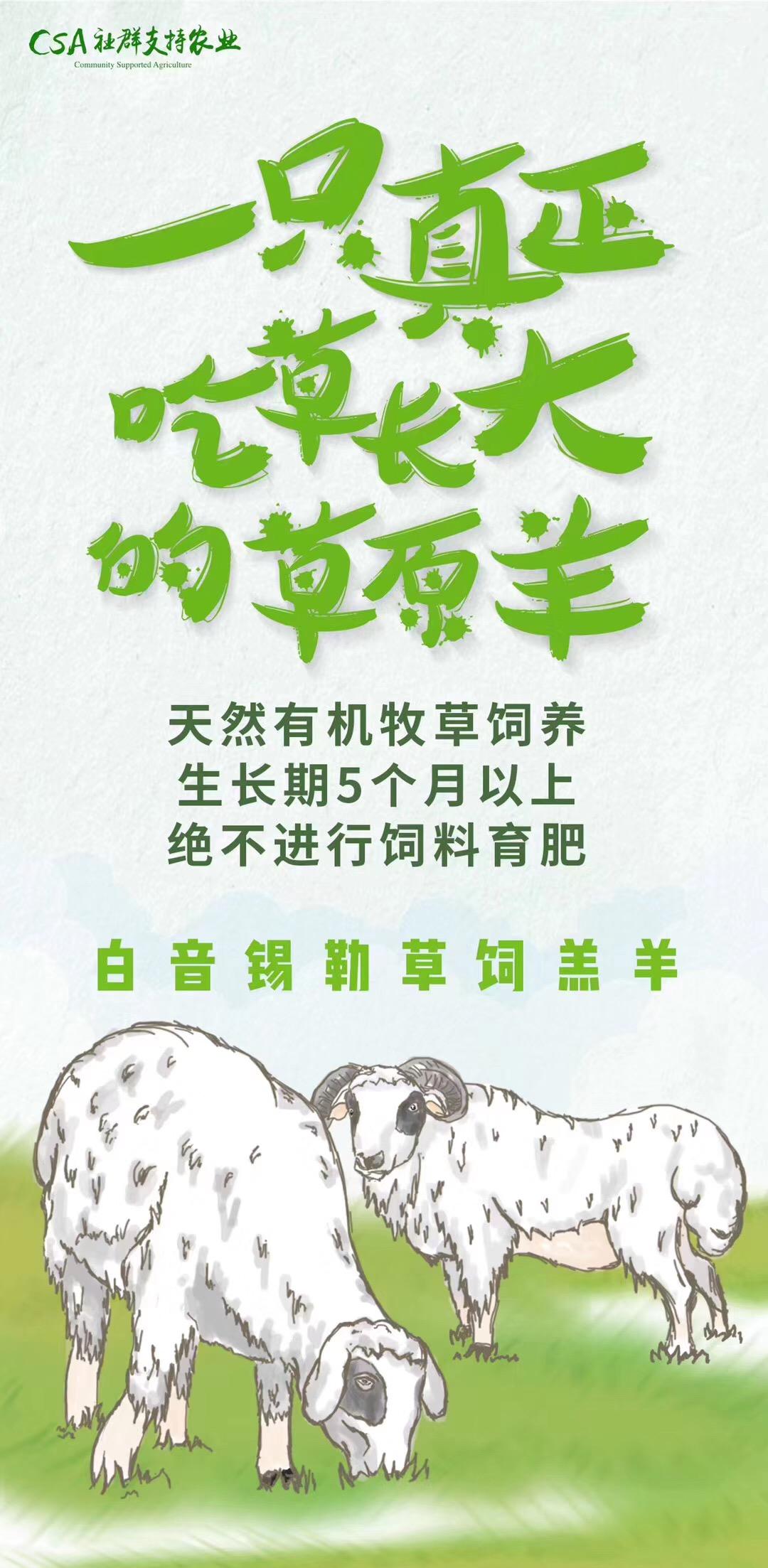 乌珠穆沁羊肉-纯草羊