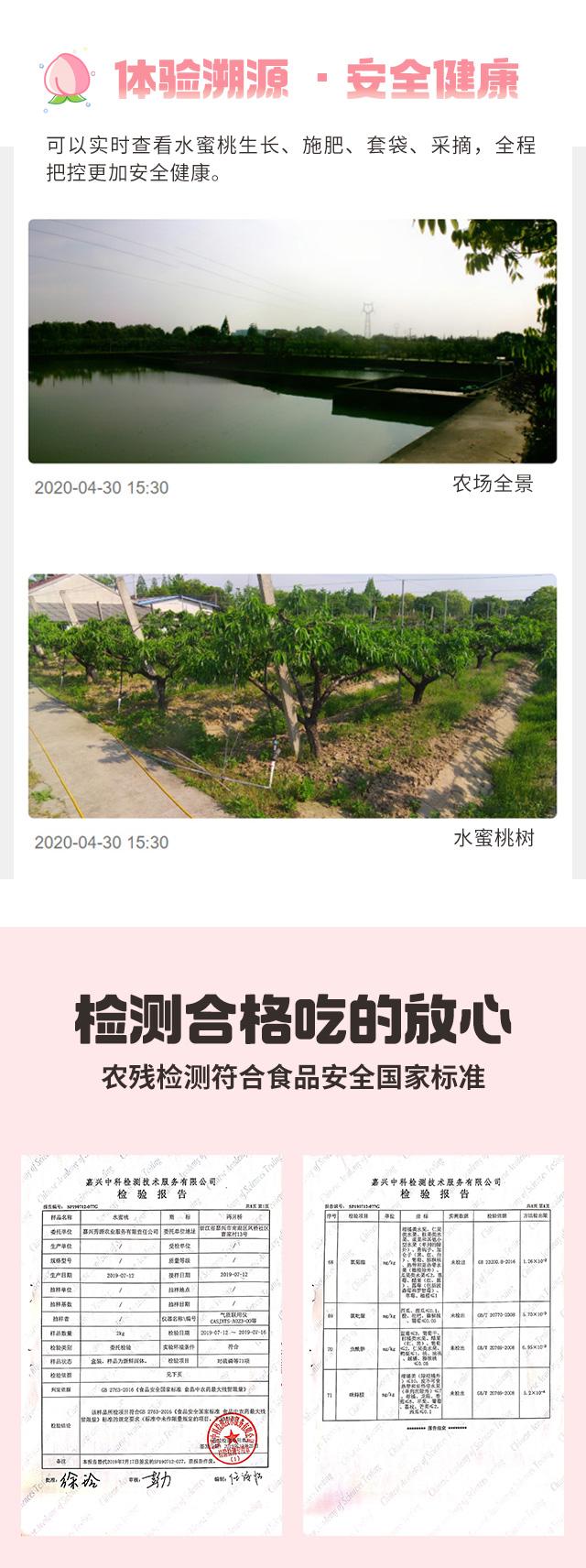 凤桥水蜜桃