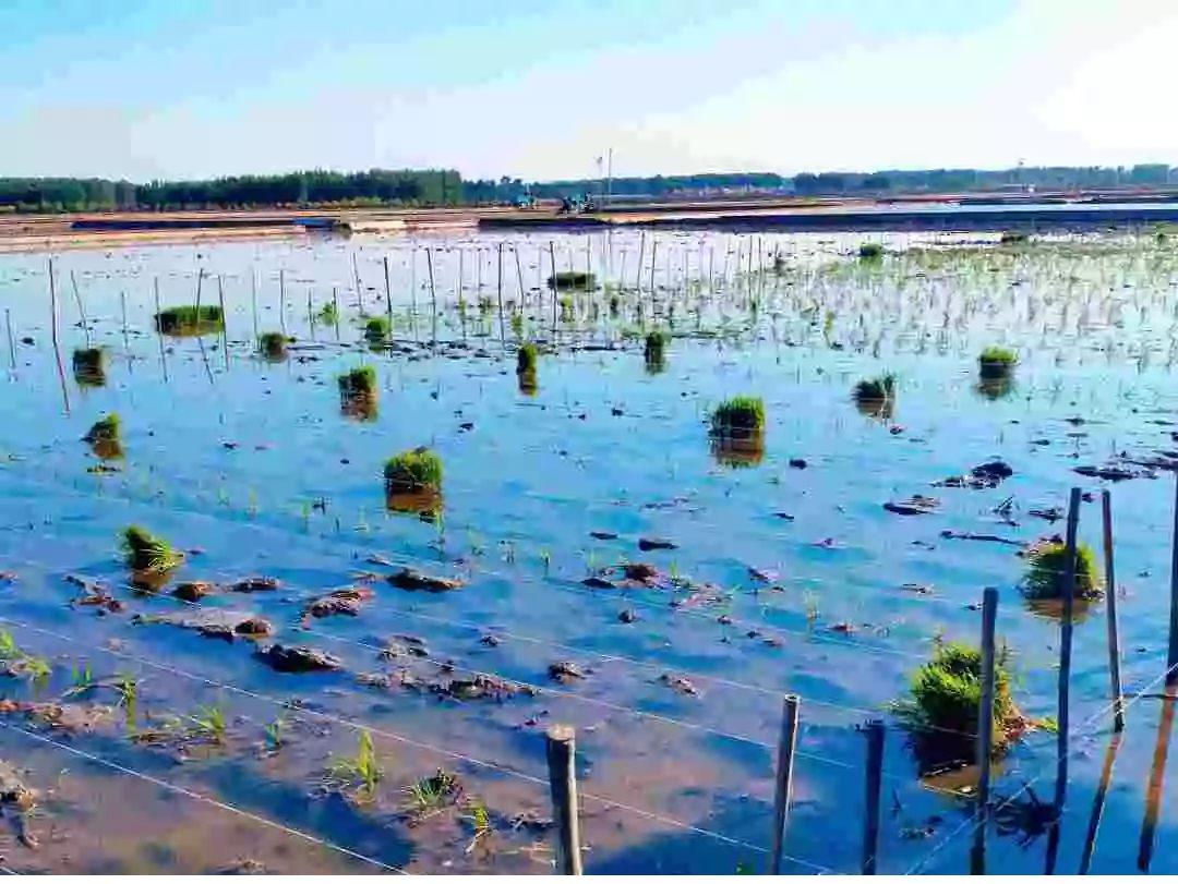 农地产,中国下一个暴利行业?